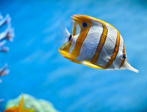 Ζωή στη Θάλασσα